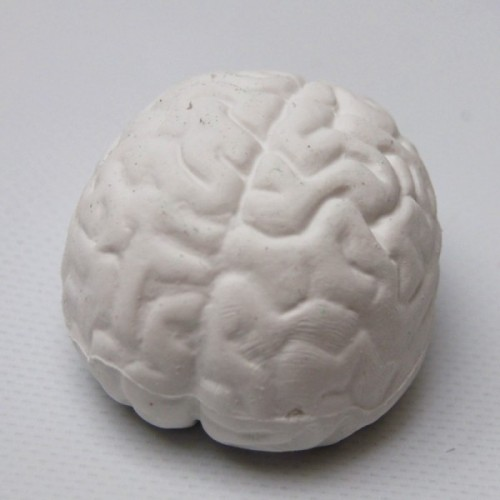 3d rubber eraser the brain
